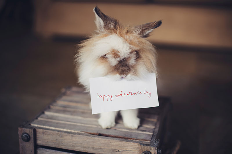 Valentines Day Manchester